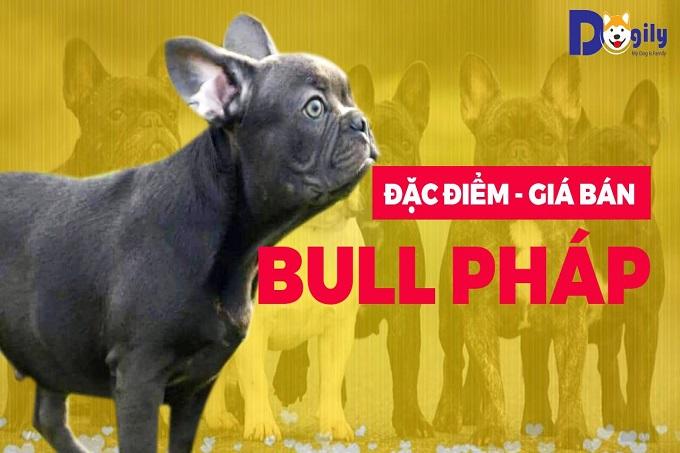 Chó Bull Pháp