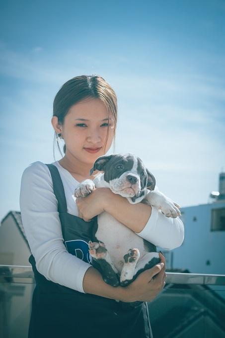 Chó Bully được lai tạo từ dòng chó Pitbull nổi tiếng