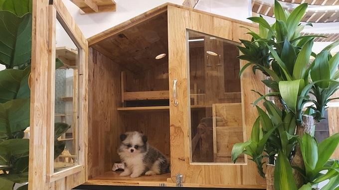 Phòng cho chó nhỏ tại Khách sạn chó mèo Dogily Pets Hotel