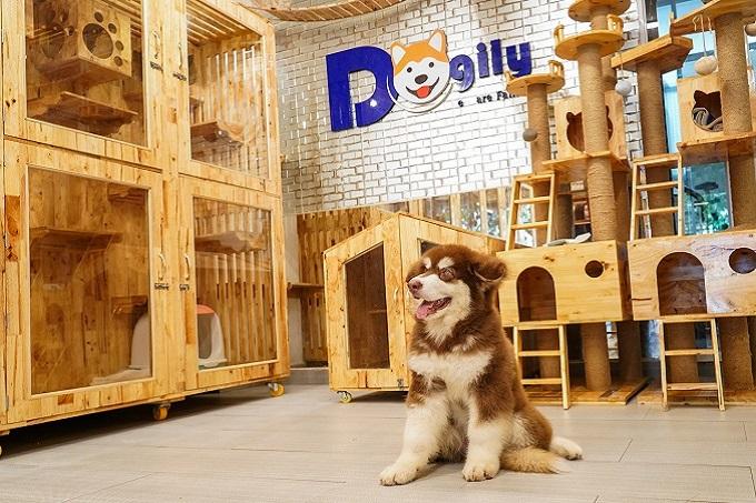 Bán chó Alaska Giant khổng lồ con Dogily Pet Shop.
