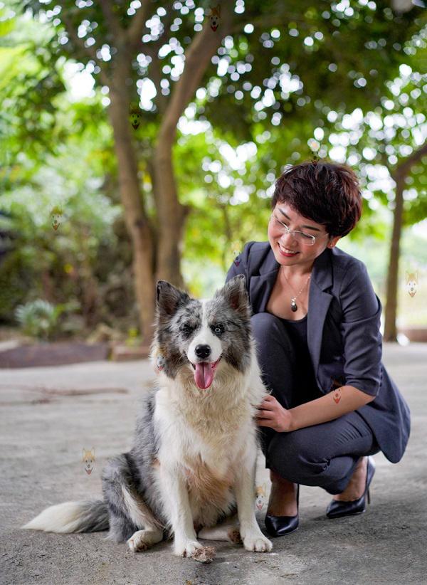 Chó Border Collie thuần chủng – Mua bán chó Border Collie con giá tốt tại Dogily Petshop Hà Nội, TpHCM