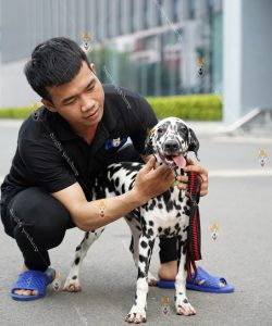 https://dogily.vn/cho-canh/dalmatian/
