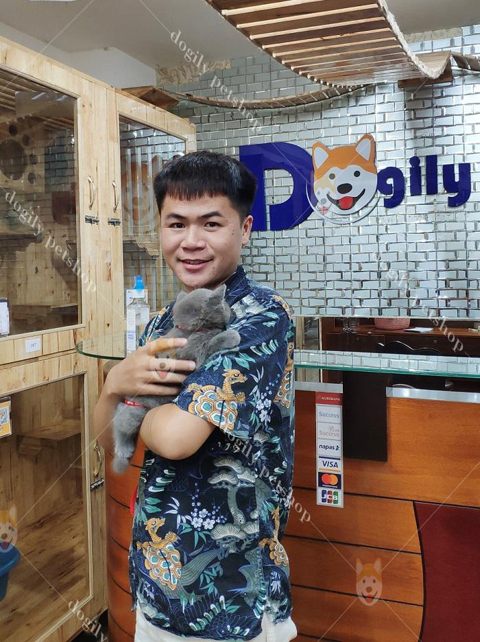 Mua bán mèo Anh lông ngắn con thuần củng, giá tốt tại Dogily Petshop.