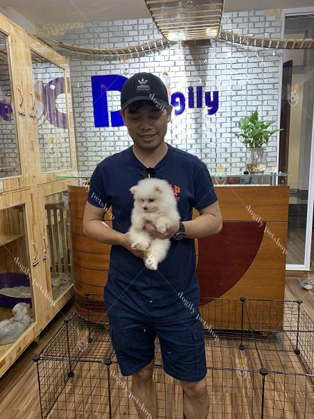 Mua bán chó Phốc Sóc Pomeranian mini mặt gấu giá tốt nhất – Dogily Petshop tại TPHCM, Hà Nội