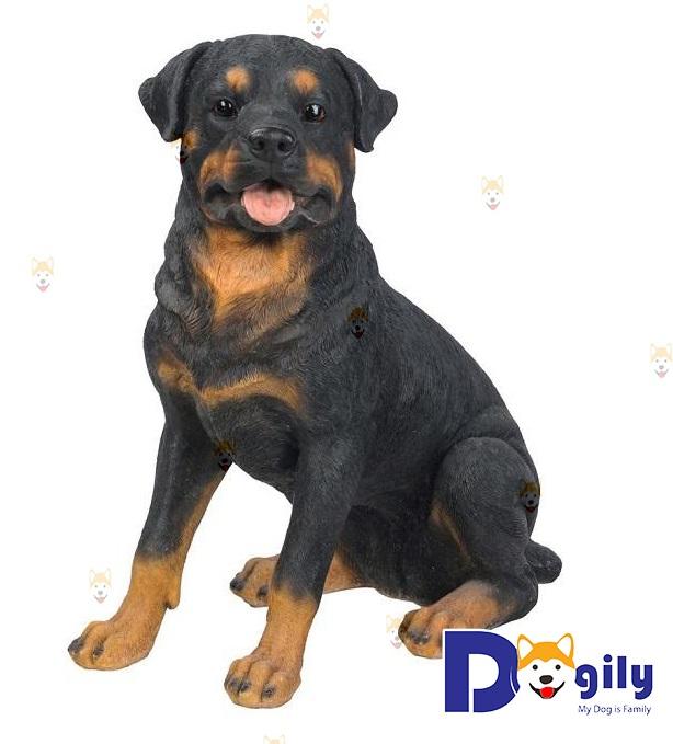 Cho chó Rottweiler ăn gì trong từng giai đoạn?