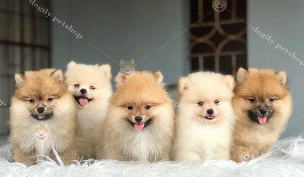 Tain phòng khám Dogily Clinic, thú cưng của bạn sẽ được chăm sóc một cách tốt nhấtCl