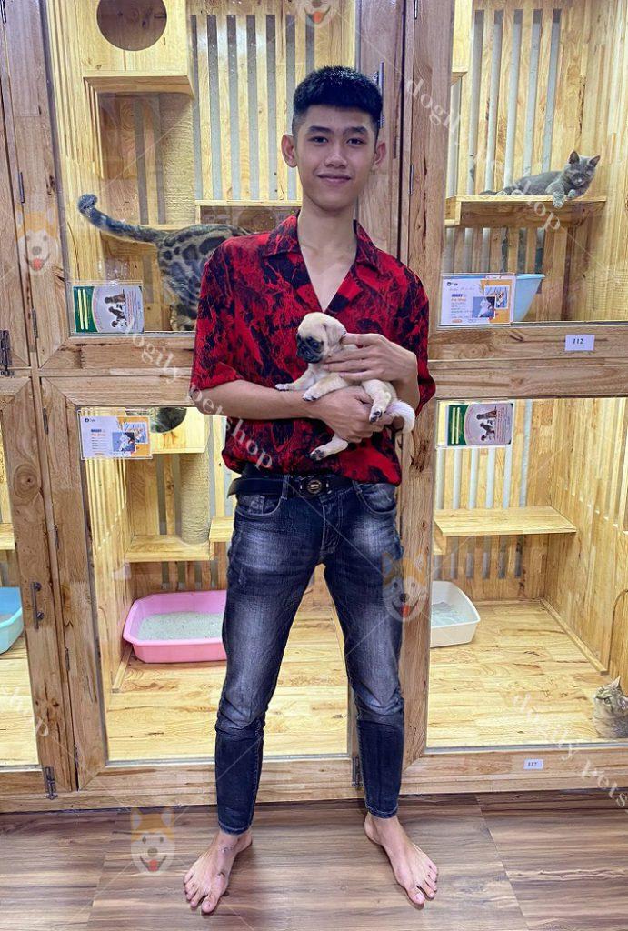 Mua Bán Chó Poodle Giá Tốt Nhất – Dogily Petshop Tại TPHCM, Hà Nội