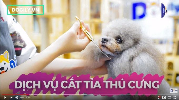 Cắt tỉa lông thú cưng tạo Dogily Petshop