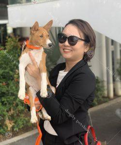 chó cảnh Baenji - Dogily Petshop