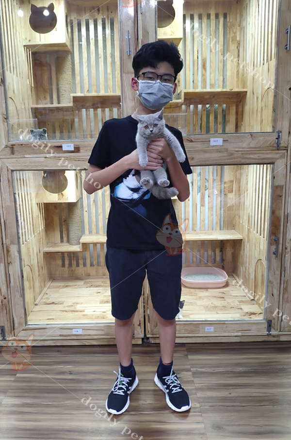 Khách hàng mua chó mèo cảnh con thuần chuẩn tại Dogily petshop Hà Nội, TpHCM