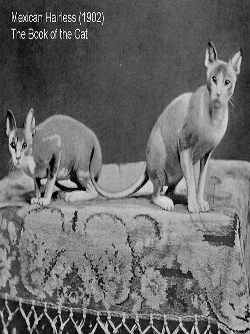 Cặp mèo không lông đầu tiên được ghi nhận năm 1902.