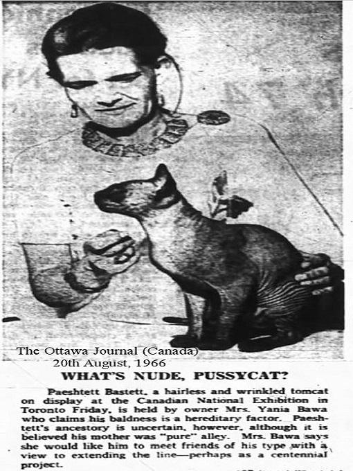 Chú mèo không lông Prune trên báo Canada năm 1966.