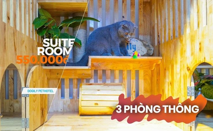 Khách sạn chó mèo - Dogily Pets Hotel. Trông giữ thú cưng uy tín đẳng cấp 5 sao tại Tphcm, Hà Nội