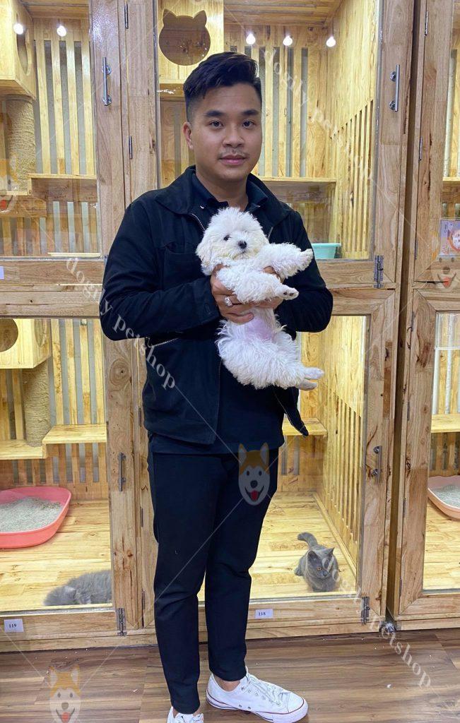 T1.C11-Poodle-Dogily-Petshop