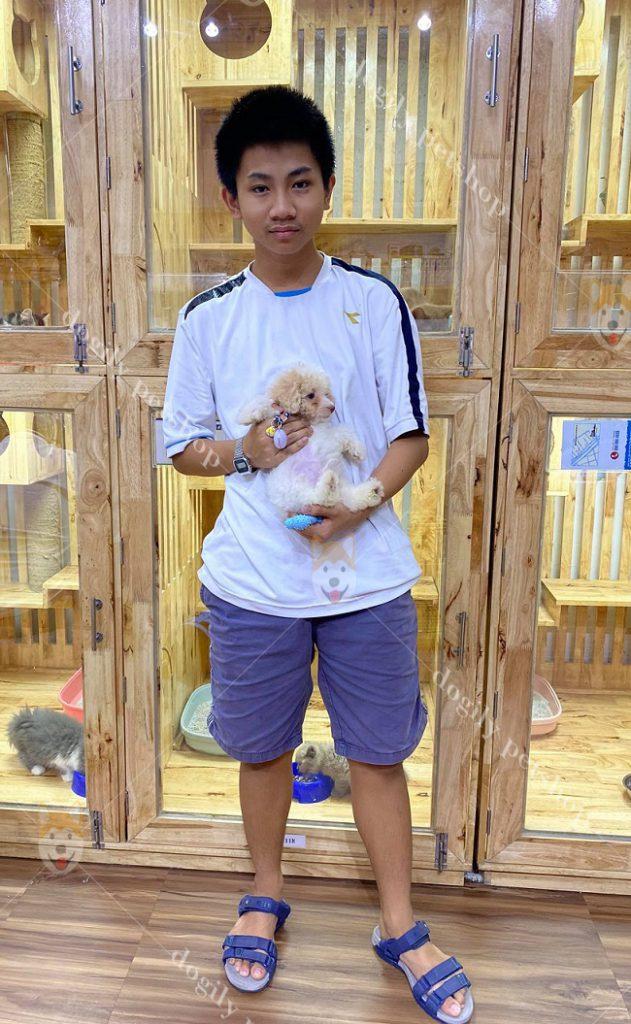 Anh Nguyễn Lê Quân (Nhà Bè, TP.HCM) sở hữu chó Poodle con thuần chủng màu vàng tại Dogily Petshop 3/2/