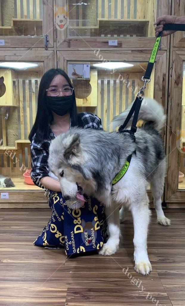 T1.C6-Alaska-Dogily-Petshop