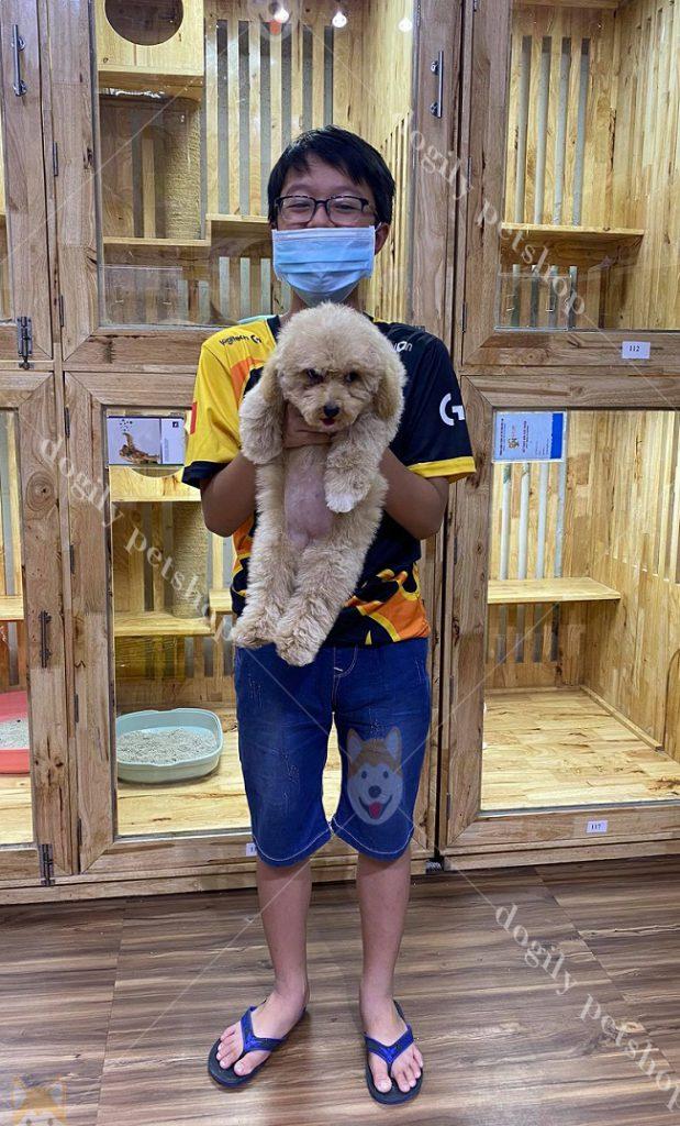 T1.C7-Poodle-Dogily-Petshop