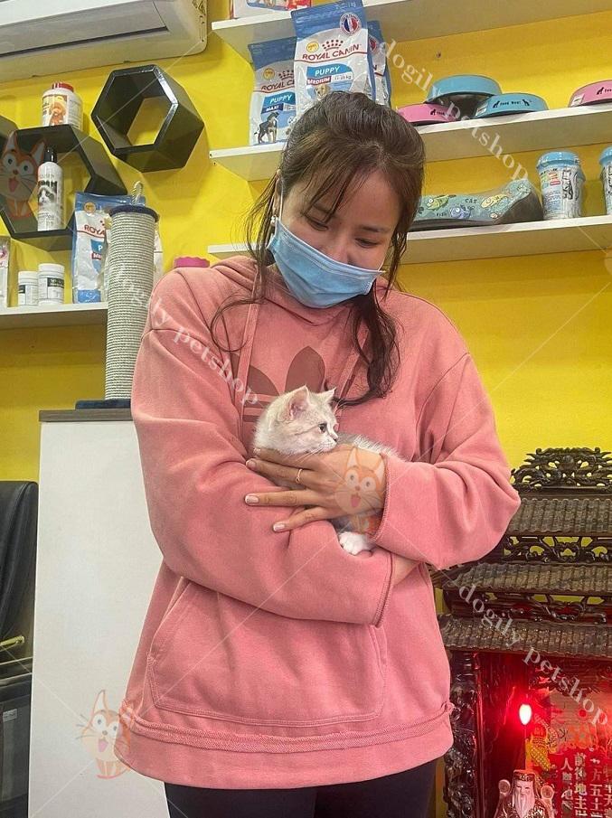 khách hàng mua mèo Munchkin tại DSogily Petshop