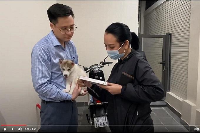 Khách hàng mua chó Husky con màu xám trắng 2 tháng tuổi được Dogily Petshop giao tận nhà tại Thành phố Thái Nguyên.