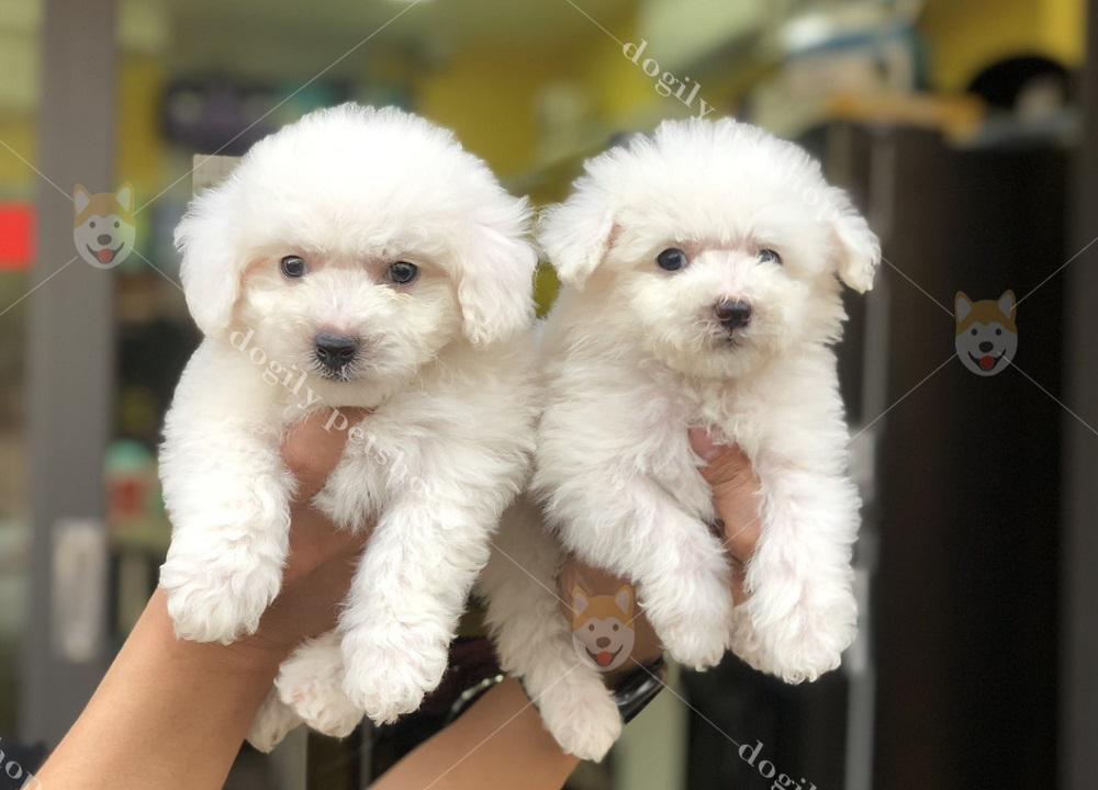 Dogily Petshop - mua bán chó mèo cảnh, phụ kiện, dịch vụ thú cưng toàn quốc