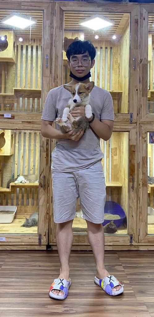 Mua chó Corgi con thuần chủng, giá tốt tại Dogily Petshop