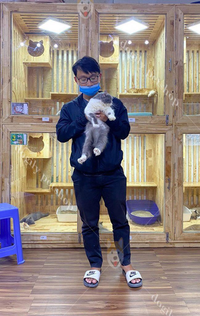 Mua mèo con ALD thuần chủng tại Dogily Petshop