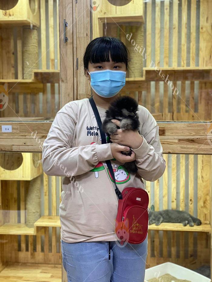Khách hàng mua chó mèo cảnh tại Dogily Petshop