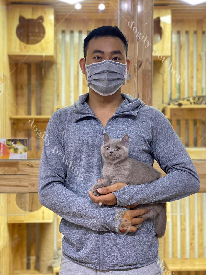 Mua mèo con ALN xám xanh