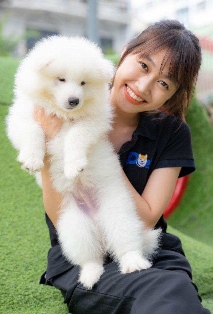 Chó Samoyed - Dogily Petshop