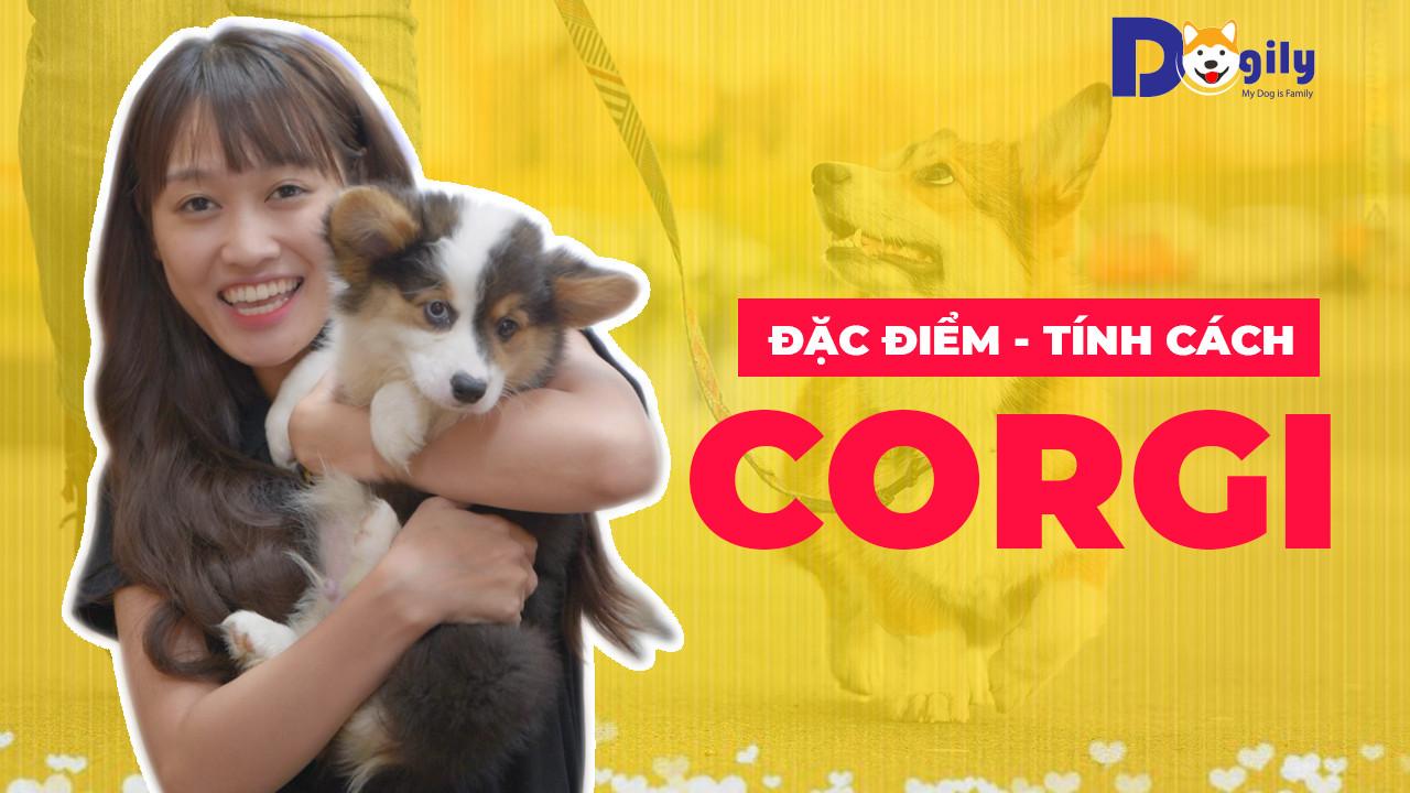Đặc điểm chó Corgi