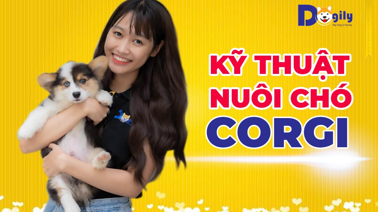 Kỹ thuật nuôi chó Corgi - Chó Corgi có dễ nuôi không? Cách nuôi chó Corgi cho người mới bắt đầu