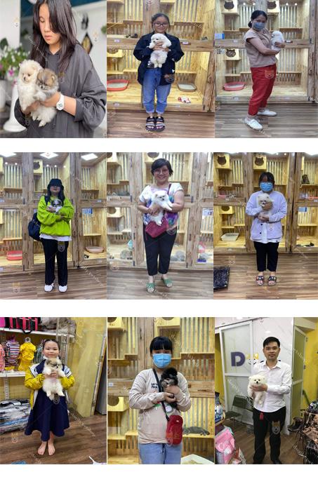 Hình ảnh một số khách hàng chọn mua chó Phốc sóc từ hệ thống Trang trại Dogily Petshop trên toàn quốc.
