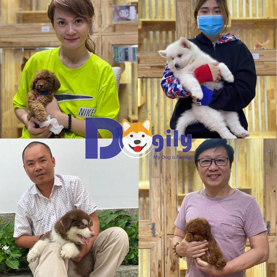 khách mua hàng tại dogily petshop