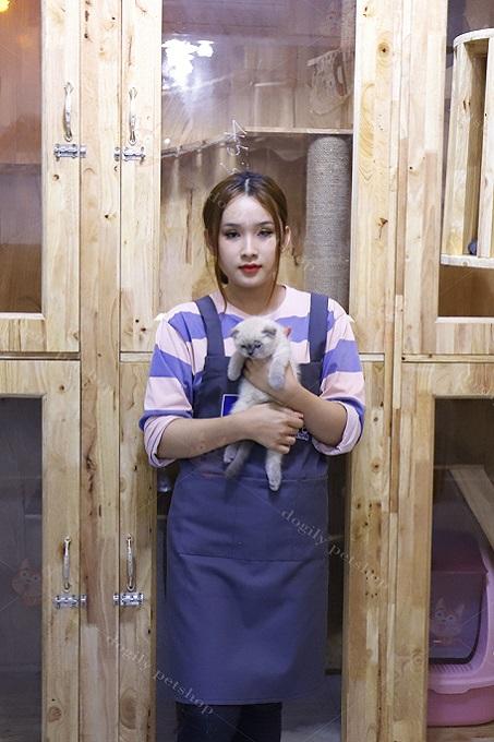 Bạn có thể hoàn toàn an tâm khi mua mèo bicolor con bán ra từ hệ thống Dogily Petshop.