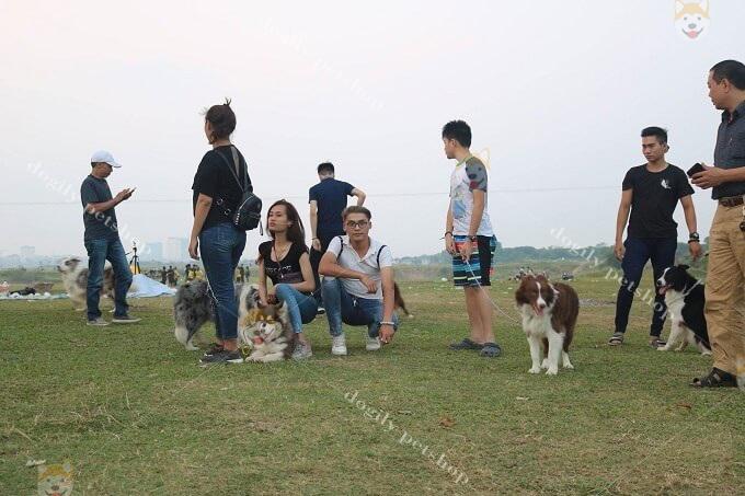 Bạn nên dành thời gian cho cún tham gia các buổi offline ngoài trời với bạn bè...