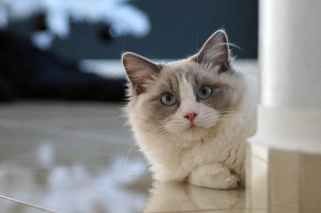 Đưa mèo cưng tới bác sĩ thú y thăm khám khi có dấu hiệu lạ