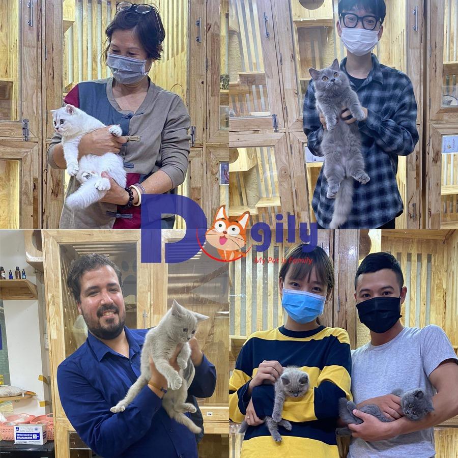 khách mua mèo tại Dogily