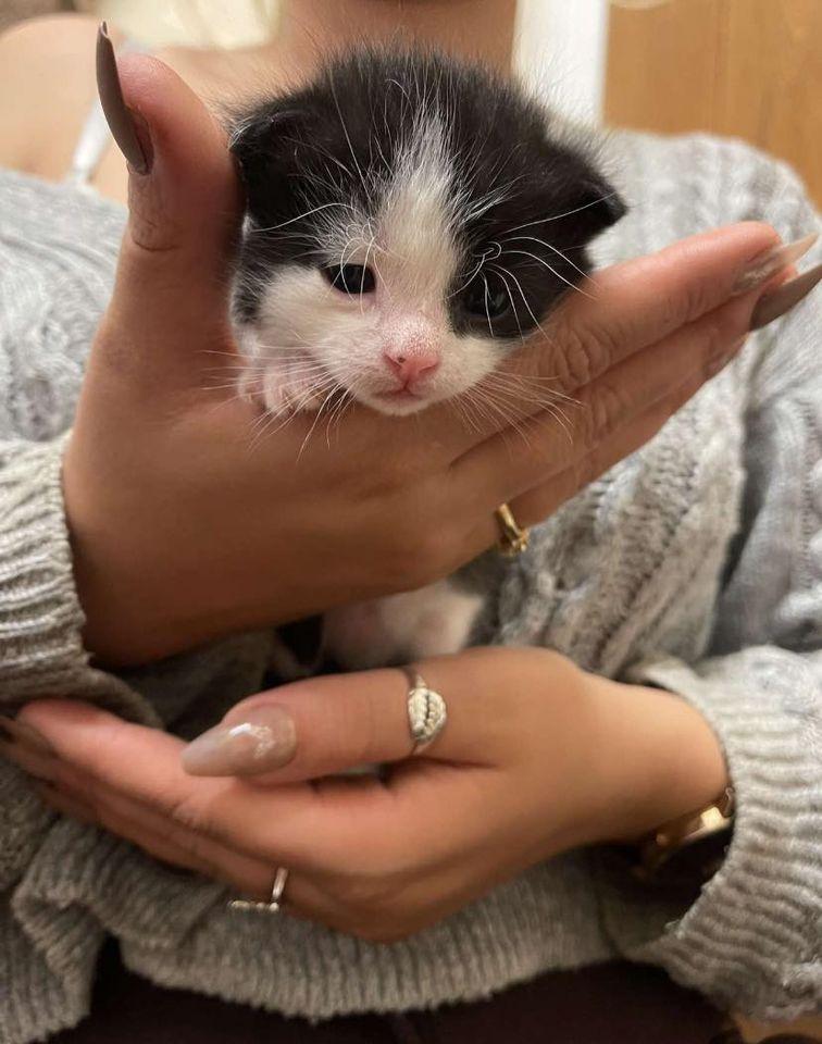 mèo sơ sinh