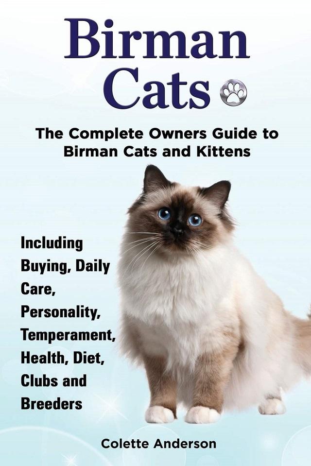 Tìm hiểu đặc điểm ngoại hình của mèo Thần Miến Điện