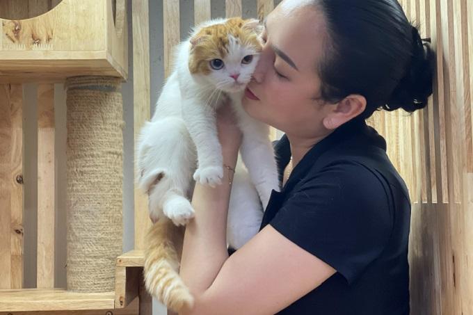 Một bé mèo Scottish Fold nhập khẩu của trại mèo Dogily Cattery