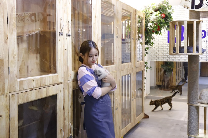 trại mèo dogily